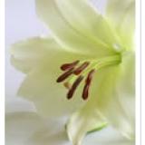 Death Notice - TERESA FORDE (née Callanan)